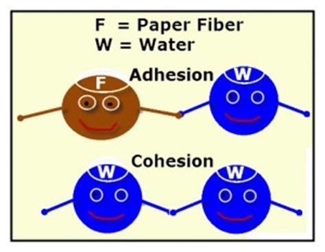 Complete research paper about biology